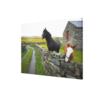 Two horses on farm in rural England Canvas Print