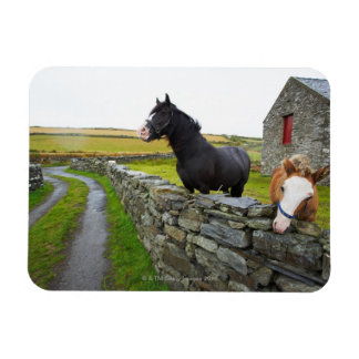 Two horses on farm in rural England Magnets