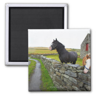 Two horses on farm in rural England Square Magnet