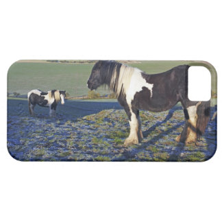 Two horses on Hackpen hill in North Wiltshire iPhone 5 Cases