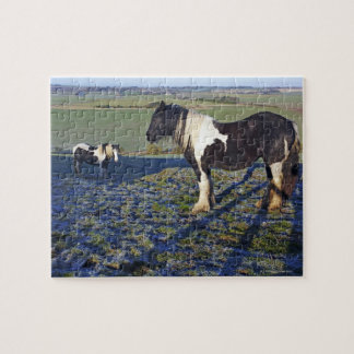 Two horses on Hackpen hill in North Wiltshire Jigsaw Puzzle