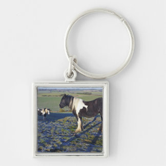 Two horses on Hackpen hill in North Wiltshire Key Ring