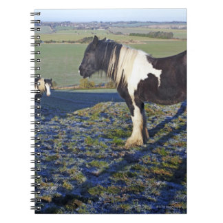 Two horses on Hackpen hill in North Wiltshire Notebook