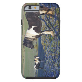 Two horses on Hackpen hill in North Wiltshire Tough iPhone 6 Case