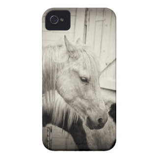 two horses outside a stable- black and white Case-Mate iPhone 4 cases