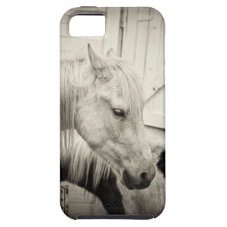 two horses outside a stable- black and white iPhone 5 covers