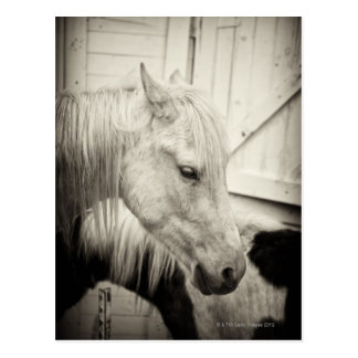 two horses outside a stable- black and white postcards