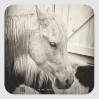 two horses outside a stable- black and white square sticker