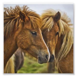 Two horses portrait art photo