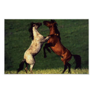Two Horses Poster