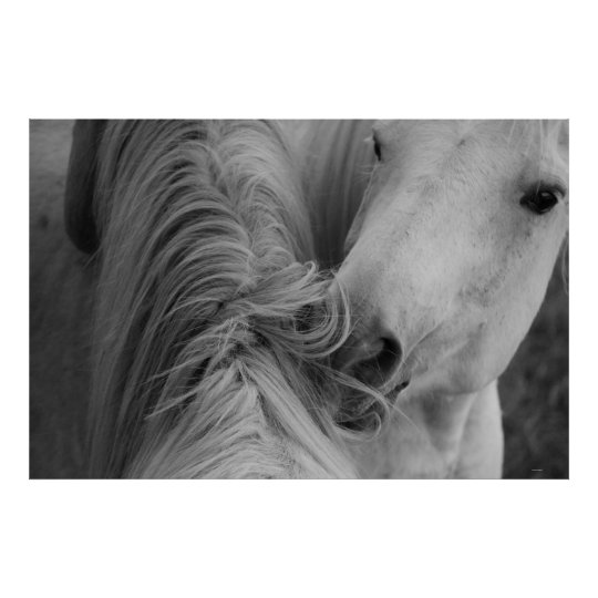 Two Horses Social Grooming B&W Equine Photography Poster
