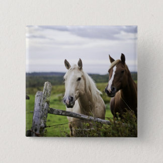 Two horses stand near fence in farm field of off 15 cm square badge
