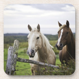 Two horses stand near fence in farm field of off beverage coaster