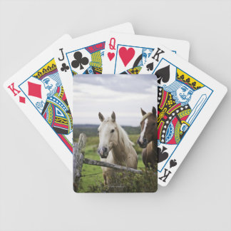 Two horses stand near fence in farm field of off bicycle playing cards