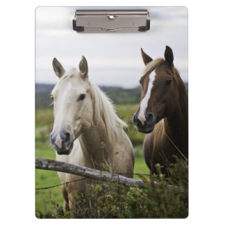 Two horses stand near fence in farm field of off clipboard