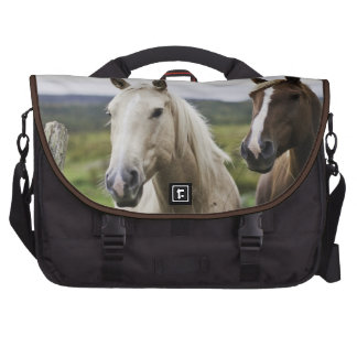 Two horses stand near fence in farm field of off laptop computer bag