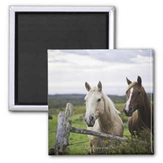 Two horses stand near fence in farm field of off square magnet