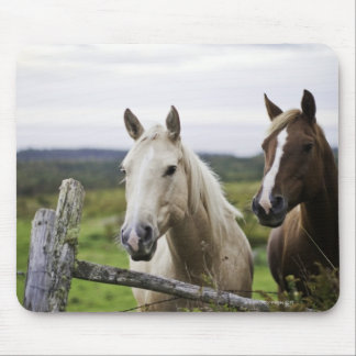Two horses stand near fence in farm field of off mouse mat