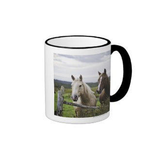 Two horses stand near fence in farm field of off mugs