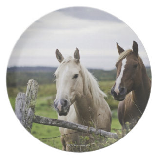 Two horses stand near fence in farm field of off plate