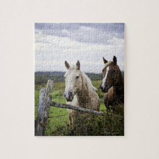 Two horses stand near fence in farm field of off puzzle