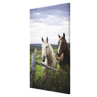 Two horses stand near fence in farm field of off stretched canvas prints