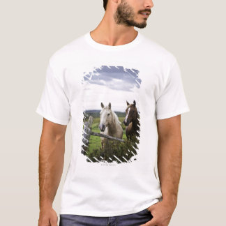 Two horses stand near fence in farm field of off T-Shirt