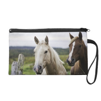 Two horses stand near fence in farm field of off wristlet clutches