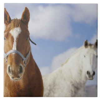 Two Horses Tile