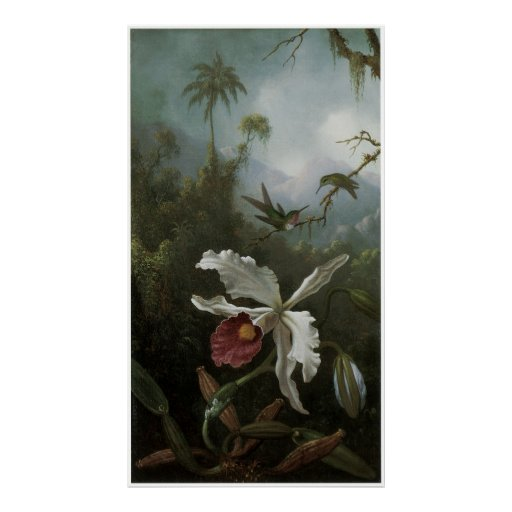 Two Hummingbirds above a White Orchid, 1870s Poster
