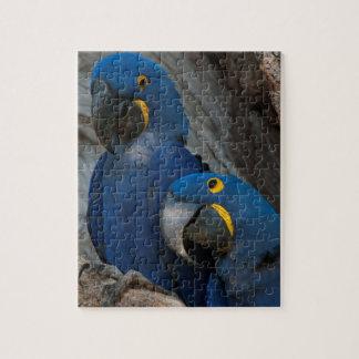 Two Hyacinth Macaws, Brazil Jigsaw Puzzle
