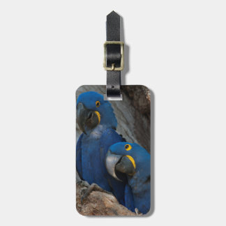 Two Hyacinth Macaws, Brazil Luggage Tag