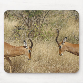 Two impalas fighting mouse pad