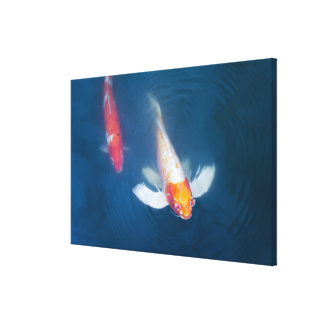 Two Japanese koi fish in pond Canvas Print