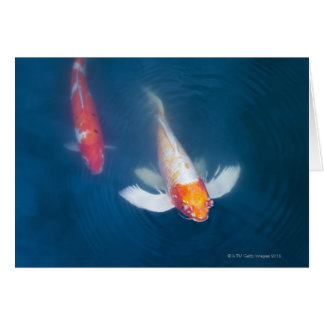 Two Japanese koi fish in pond Card