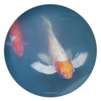 Two Japanese koi fish in pond Plate