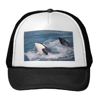 Two killer whales cap