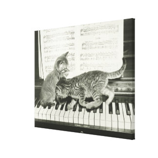 Two kitten playing on piano keyboard, (B&W) Canvas Prints
