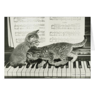 Two kitten playing on piano keyboard card