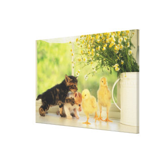 Two Kittens and Two Chicks Playing, Front View, Canvas Print