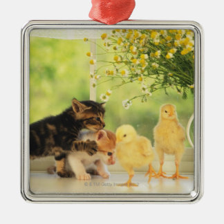 Two Kittens and Two Chicks Playing, Front View, Christmas Ornament