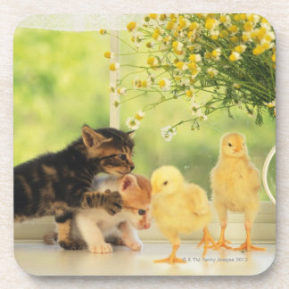 Two Kittens and Two Chicks Playing, Front View, Coaster