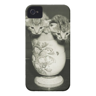 Two kittens hiding in vase, (B&W) iPhone 4 Covers