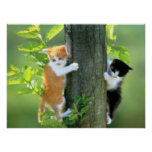 Two Kittens in a Tree Poster