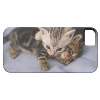 Two kittens iPhone 5 covers