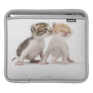Two kittens kissing against white background iPad sleeve