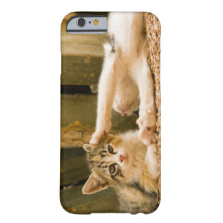 Two kittens, Morocco Barely There iPhone 6 Case