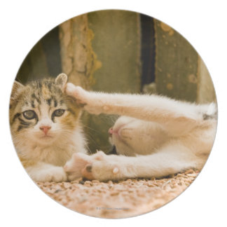 Two kittens, Morocco Plates