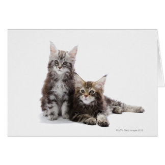 Two kittens of Maine coon cat Greeting Card