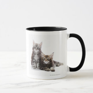 Two kittens of Maine coon cat Mug